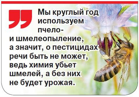 Синьор помидор с российской пропиской