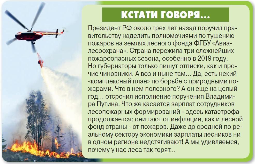 Российский лес опять брошен на произвол судьбы