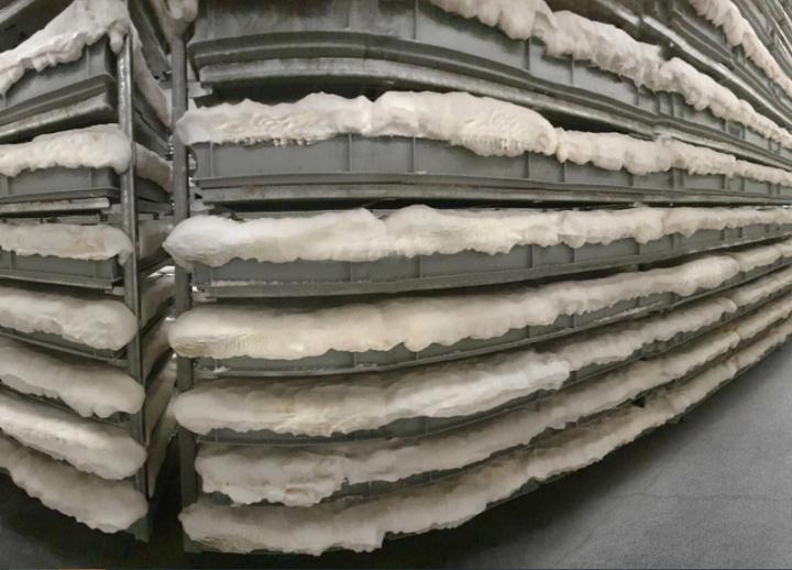 Adidas, Gucci, Stella McCartney будут производить одежду из грибов