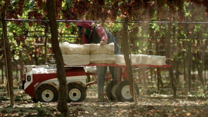 В США разработали робота-перевозчика, который будет помогать фермерам собирать урожай (фото, видео)