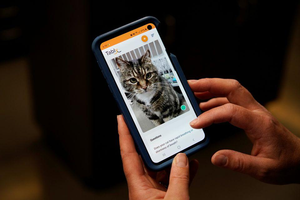 В Канаде разработали приложение, которое благодаря нейросети определяет эмоциональное состояние кошек
